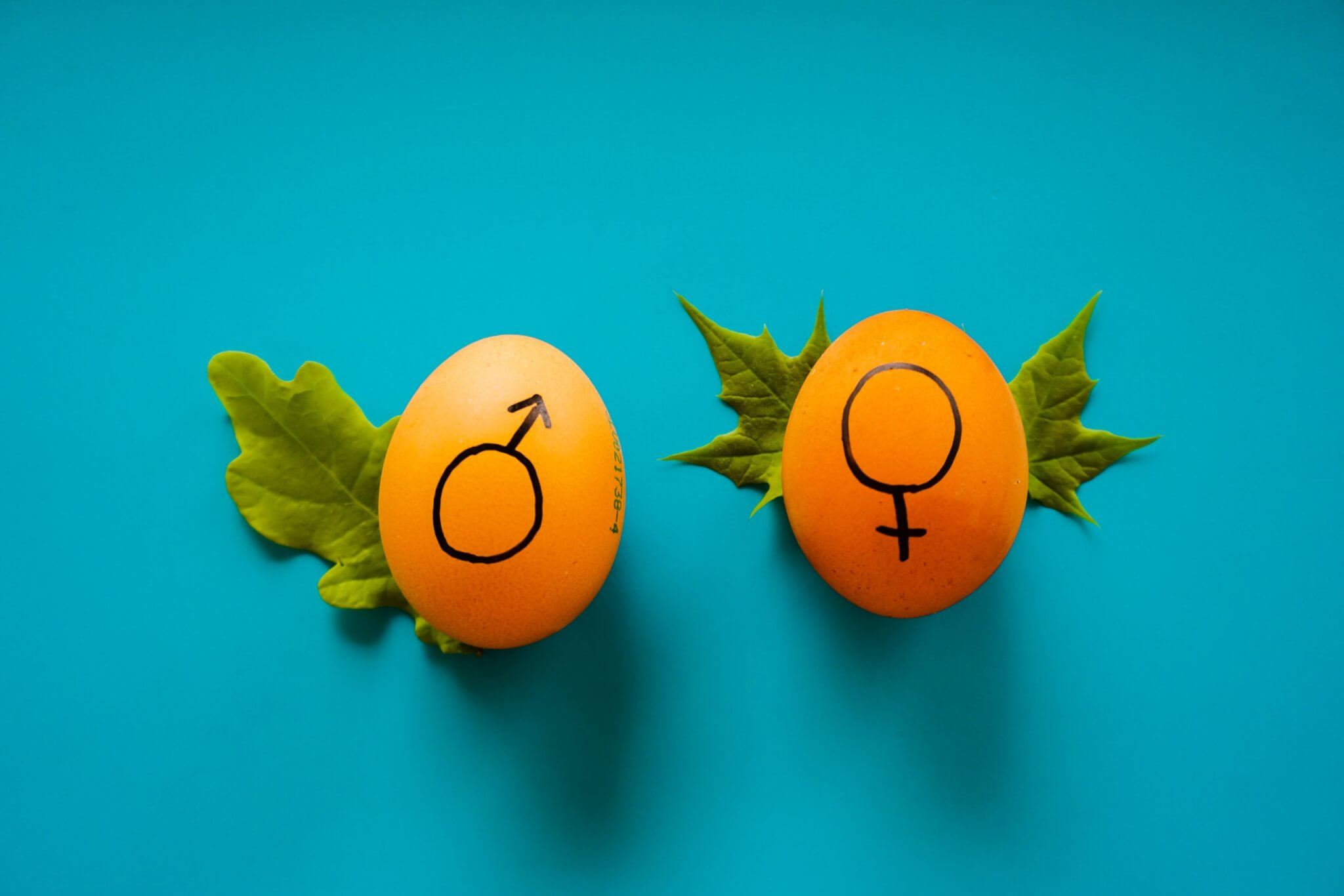 Gender-critical views protected under the Equality Act